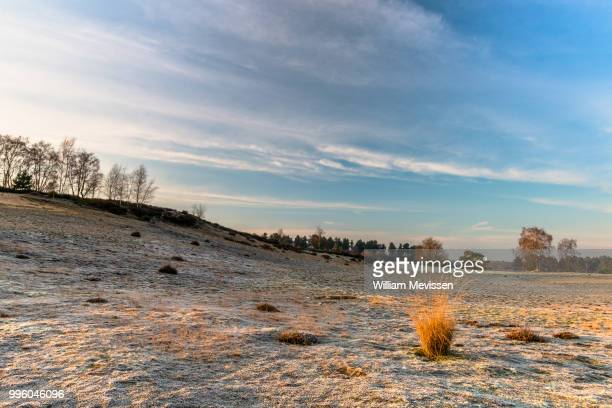 golden grass clump - william mevissen stock pictures, royalty-free photos & images