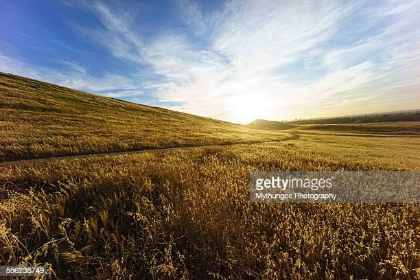 Golden Grass Hills
