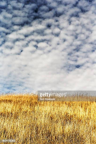 golden grasses and cloudy sky in jack london state historic park. - koeberer stock pictures, royalty-free photos & images