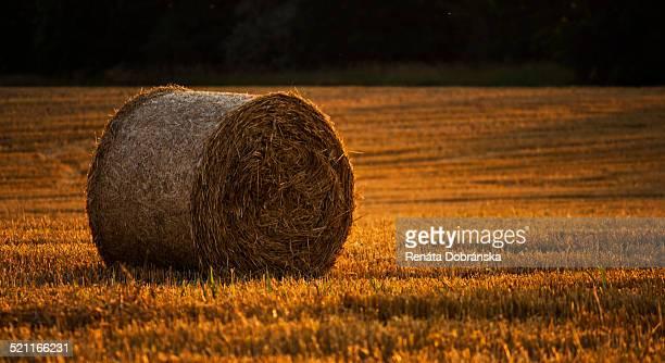 Golden hay roll