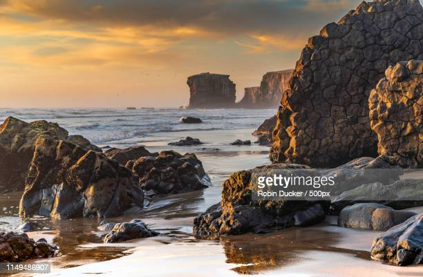 golden hour at maori bay - auckland stock pictures, royalty-free photos & images