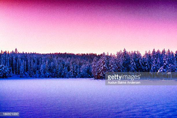 golden hour light over frozen treeline - golden hour stock pictures, royalty-free photos & images