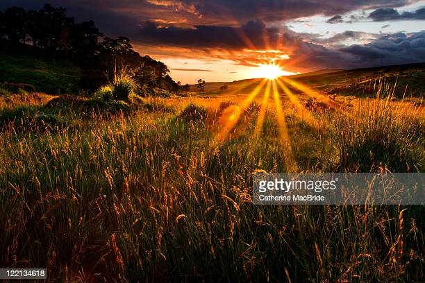 golden hour - catherine macbride stock-fotos und bilder