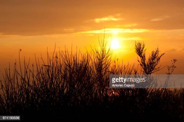 golden hour - caputo foto e immagini stock