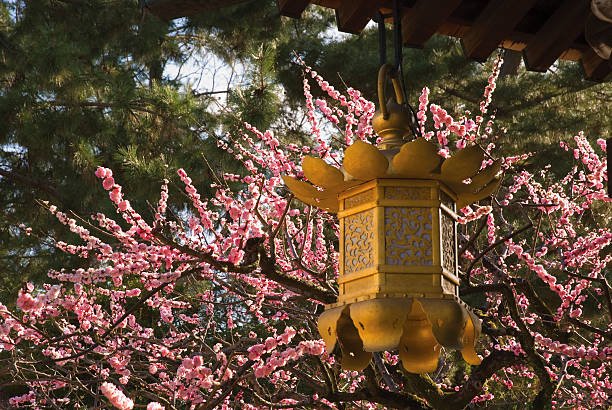 Golden Lantern With Cherry Blossoms In The Background