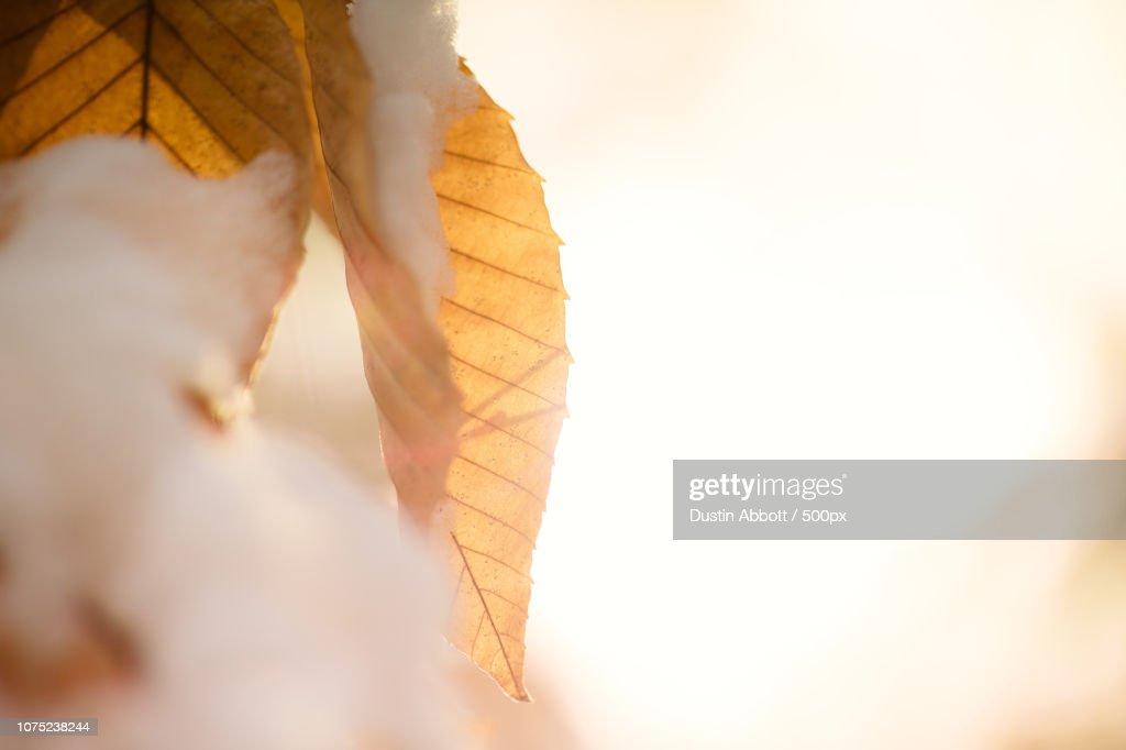 Golden Light in Winter's Cold : Foto de stock