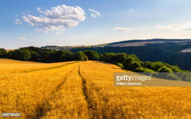 golden loreley fields - william mevissen stock pictures, royalty-free photos & images
