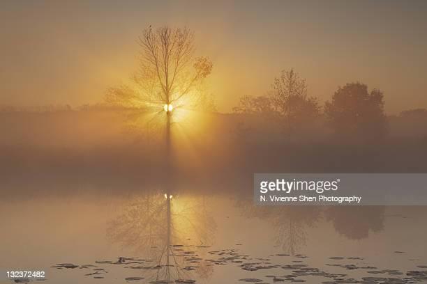 Golden misty morning