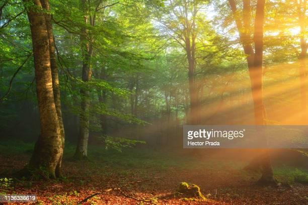 golden moment of light in a spring morning - pais vasco fotografías e imágenes de stock