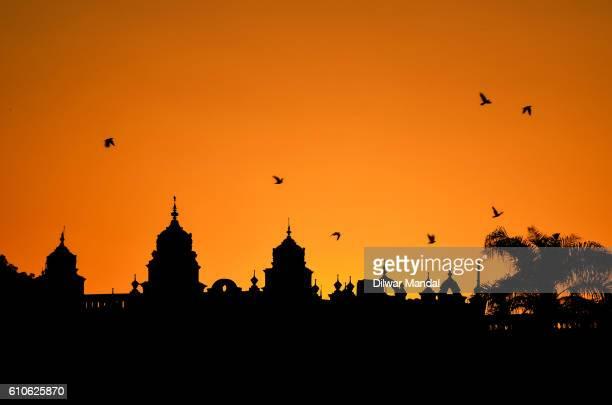 Golden Mysore