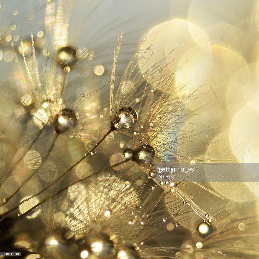 Golden nature : Stock Photo