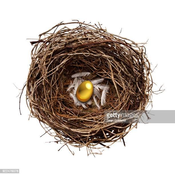 golden nest egg - nido de pájaro fotografías e imágenes de stock
