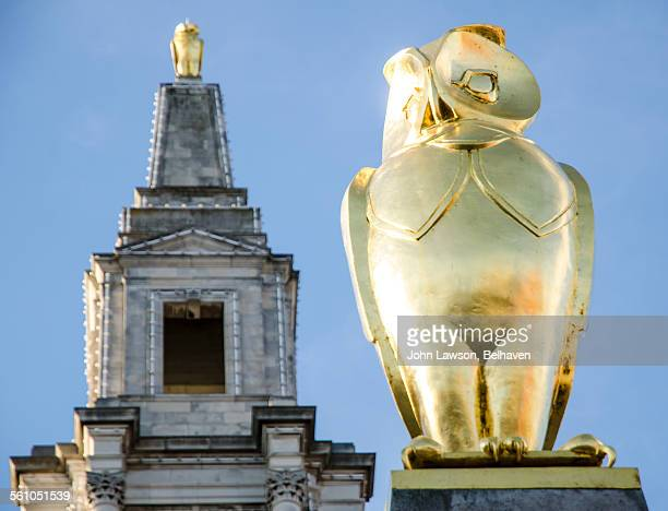 golden owls, leeds civic hall, leeds, england - artistic product stock photos and pictures