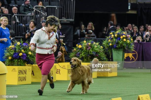 "Golden retriever ""Daniel"" wins the Sporting Group during the annual Westminster Kennel Club dog show on February 11, 2020 in New York City. The 144th..."