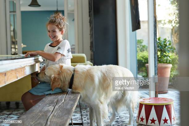 golden retriever dog eating from the hand of cute girl - dog eats out girl stock pictures, royalty-free photos & images