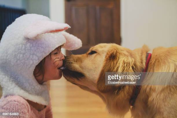 Golden retriever dog licking the face of a girl in a bunny costume