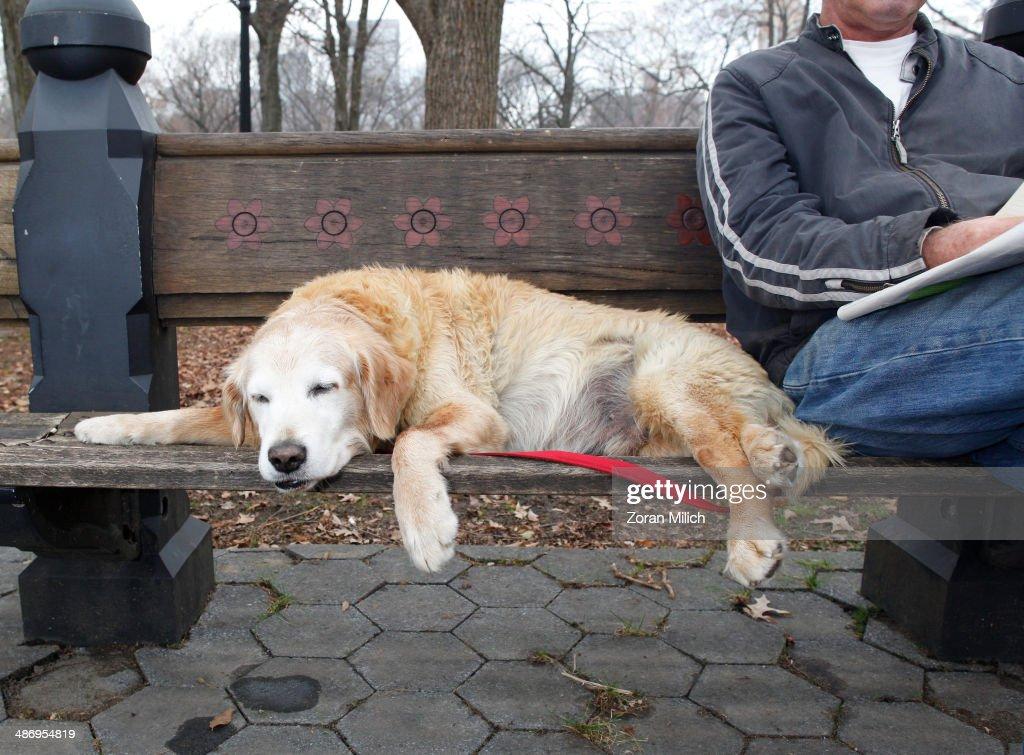 Awkward Pet Portraits : News Photo