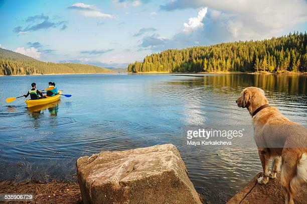 Golden retriever dog watching couple canoeing