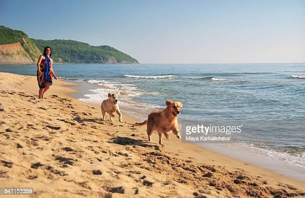Golden retriever dogs running at the beach