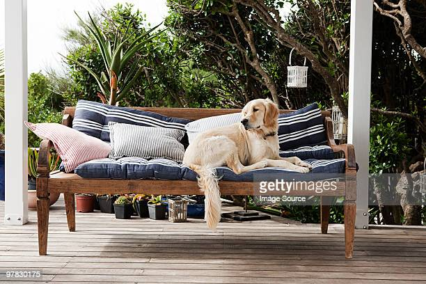 golden retriever on seat outdoors - patio stock pictures, royalty-free photos & images