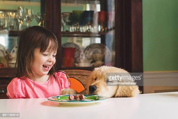 Golden retriever puppy dog begging girl for food