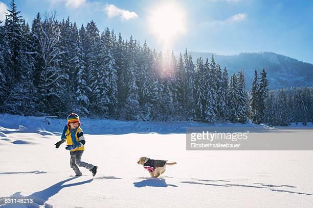 Golden retriever puppy dog running after boy