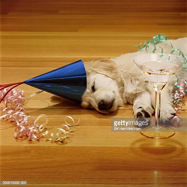 Golden retriever puppy sleeping in party hat with champagne glass on floor