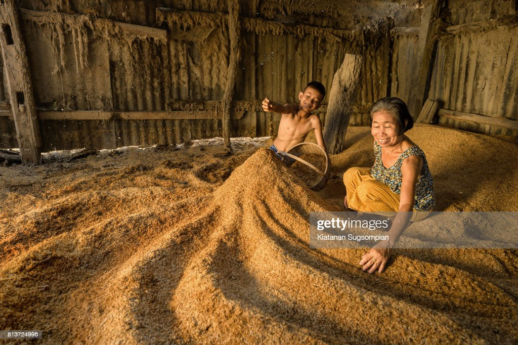 Golden rices : Stock-Foto