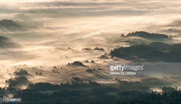 golden shades - babia góra mountain stock pictures, royalty-free photos & images
