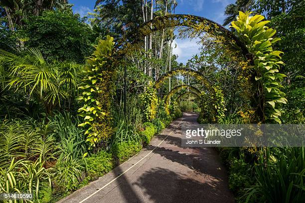 Golden Shower Arches at National Orchid Garden Singapore has been a center for orchid breeding since the 1930s Some of the garden's hybrids have...