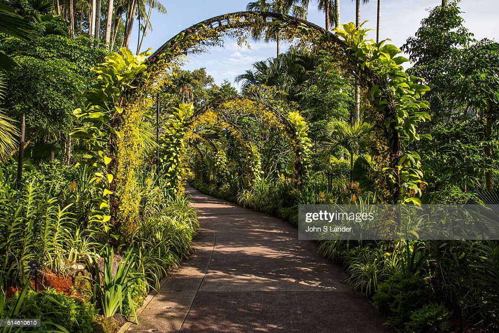 Golden Shower Arches at National Orchid Garden - Singapore... : News Photo