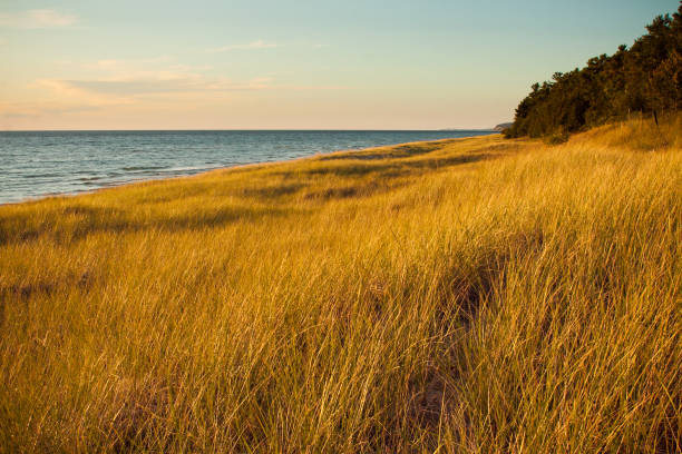Golden Summer Dune Grass on Lake Michigan