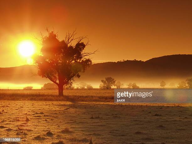 Golden sun and glow over the landscape with trees