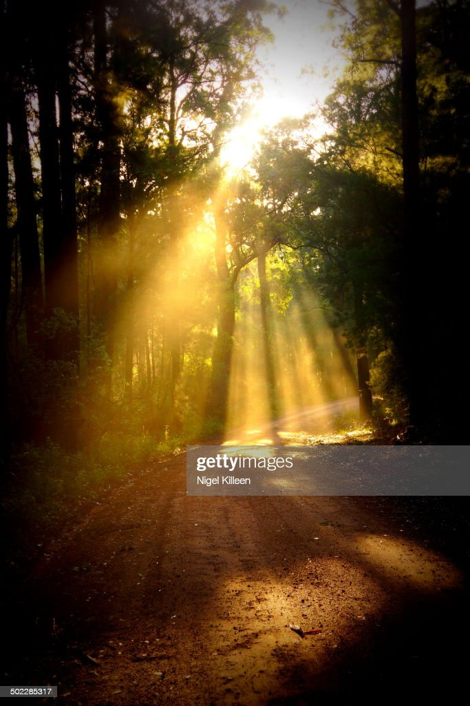 Illuminating Sunbeams : News Photo