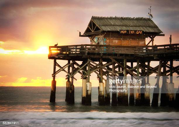 golden sunrise and a pelican silhouette - cocoa beach stock pictures, royalty-free photos & images