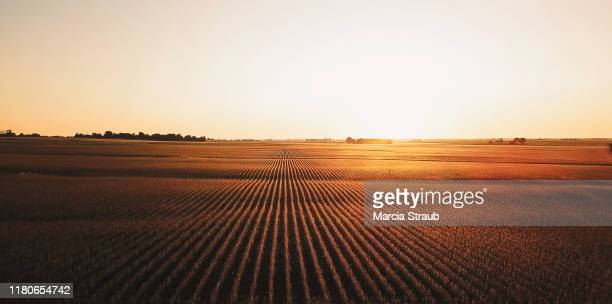 golden sunrise harvest time at a farm  field - soybean harvest stock pictures, royalty-free photos & images