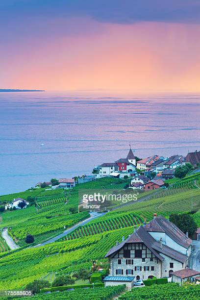 golden sunrise of vineyard - lausanne stock photos and pictures