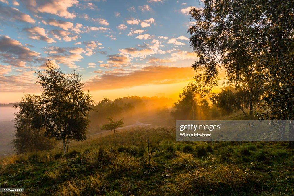 Golden Sunrise : Stockfoto