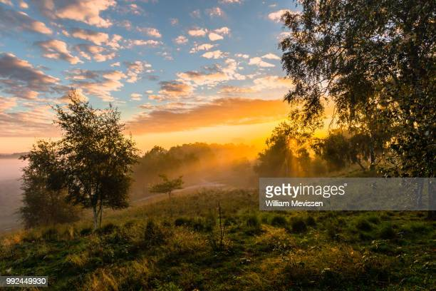 golden sunrise - william mevissen stockfoto's en -beelden