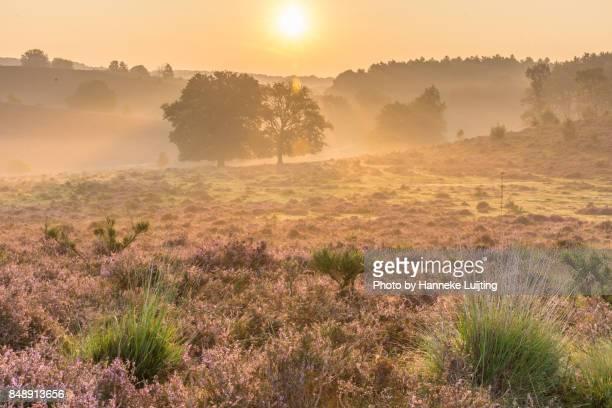 golden sunrise, veluwezoom national park - posbank ストックフォトと画像