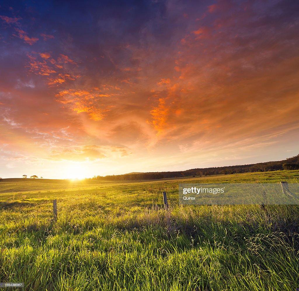 Golden Sunset : Stock Photo