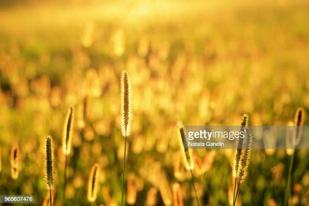 golden sunset - georgia country stock pictures, royalty-free photos & images