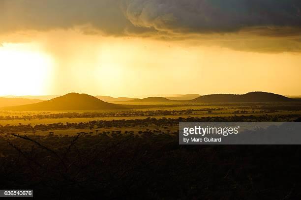 golden sunset, serengeti national park, tanzania - rainy season stock pictures, royalty-free photos & images