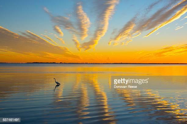 Golden sunset, Tampa Bay