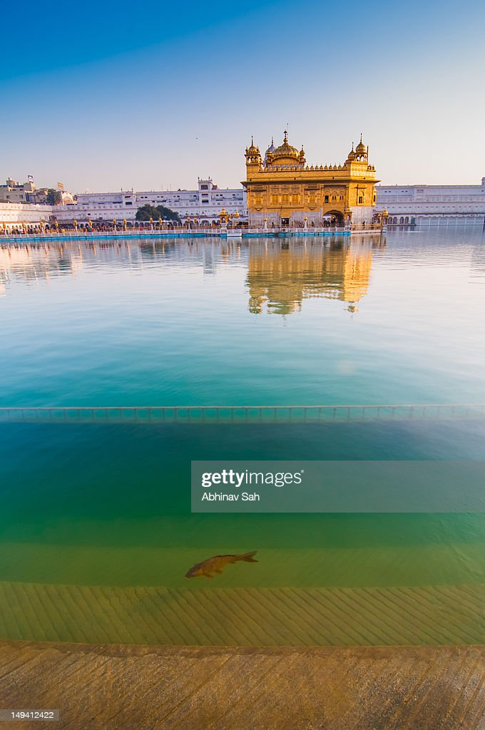 Golden Temple with fish : Stock Photo