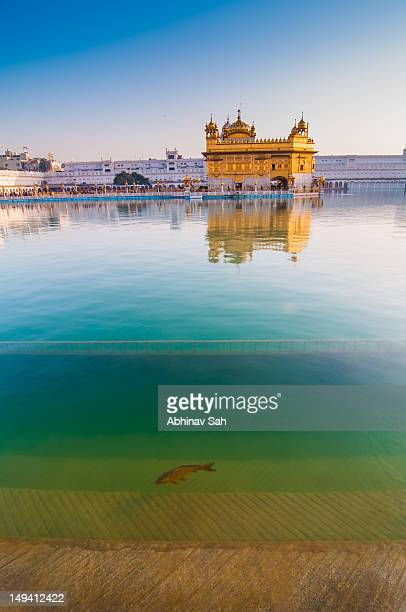 golden temple with fish - amritsar stock pictures, royalty-free photos & images