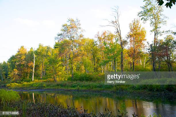 Golden view of trees near stream in late afternoon