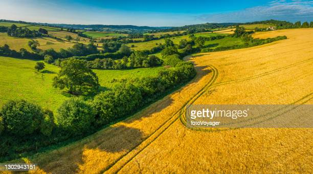 golden wheat fields green pasture idyllic country valley aerial panorama - agriculture stock pictures, royalty-free photos & images