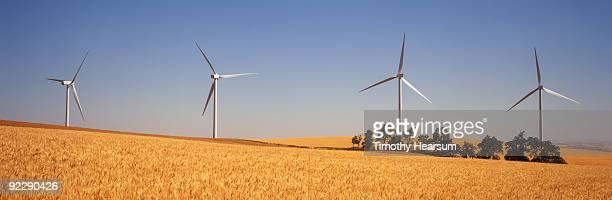 golden wheat with wind generators - timothy hearsum ストックフォトと画像
