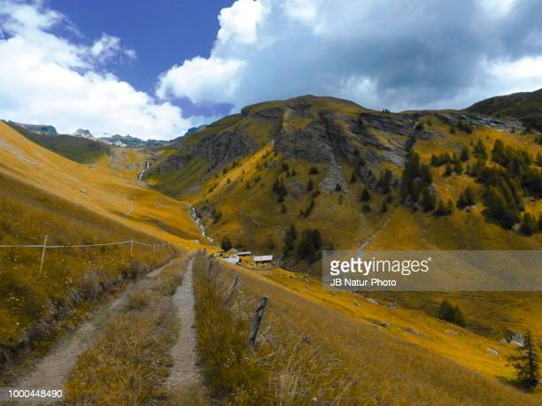 goldener herbst - natur stock pictures, royalty-free photos & images